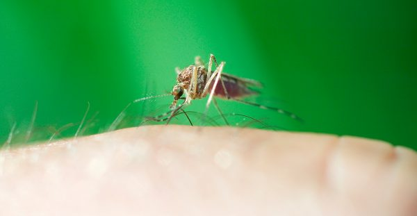 Prevent Bug Bites | AARDY.com