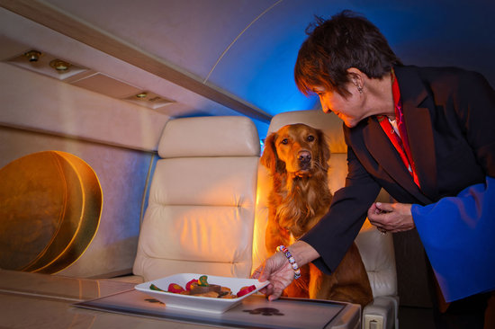 International Pet Travel Private Jet | AARDY.com