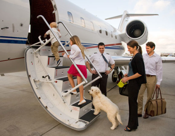 International Pet Travel | AARDY.com