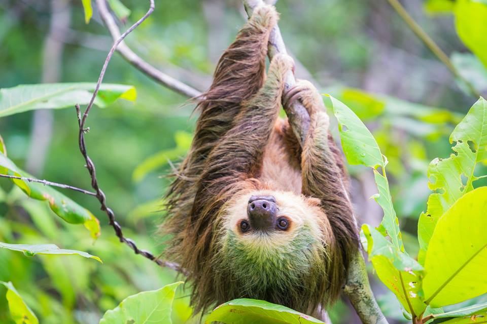 Aurora-Expeditions-Sloth | AARDY.com