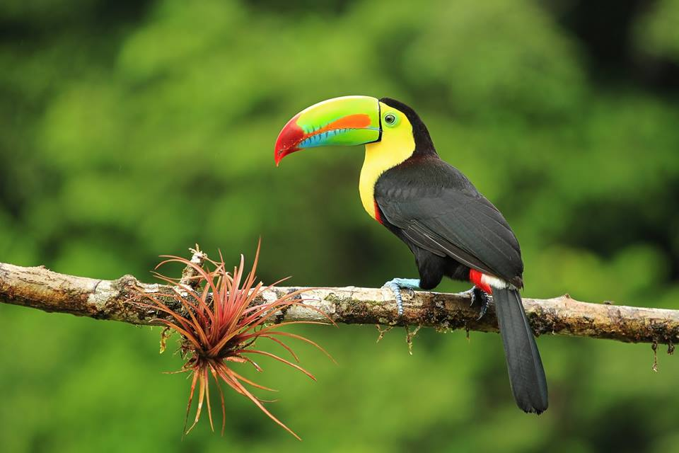 Aurora-Expeditions-Toucan | AARDY.com