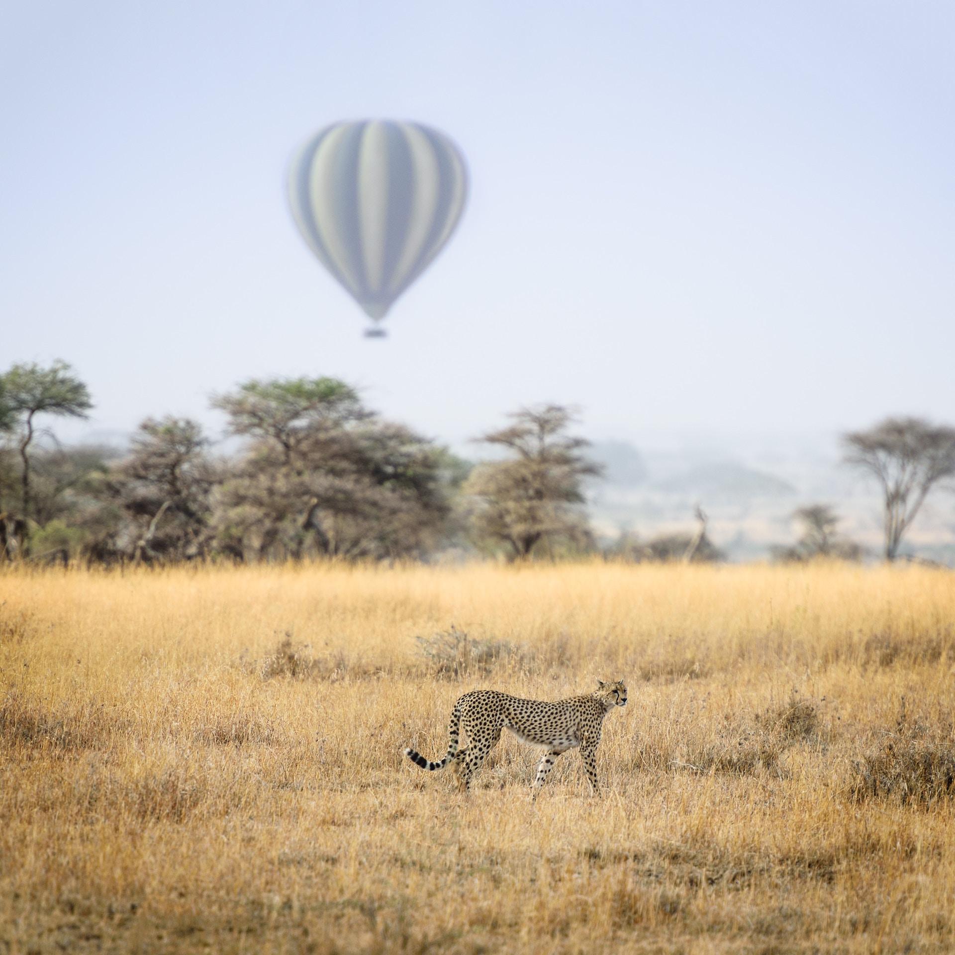Safari-Travel-Insurance-Tanzania | AardvarkCompare.com