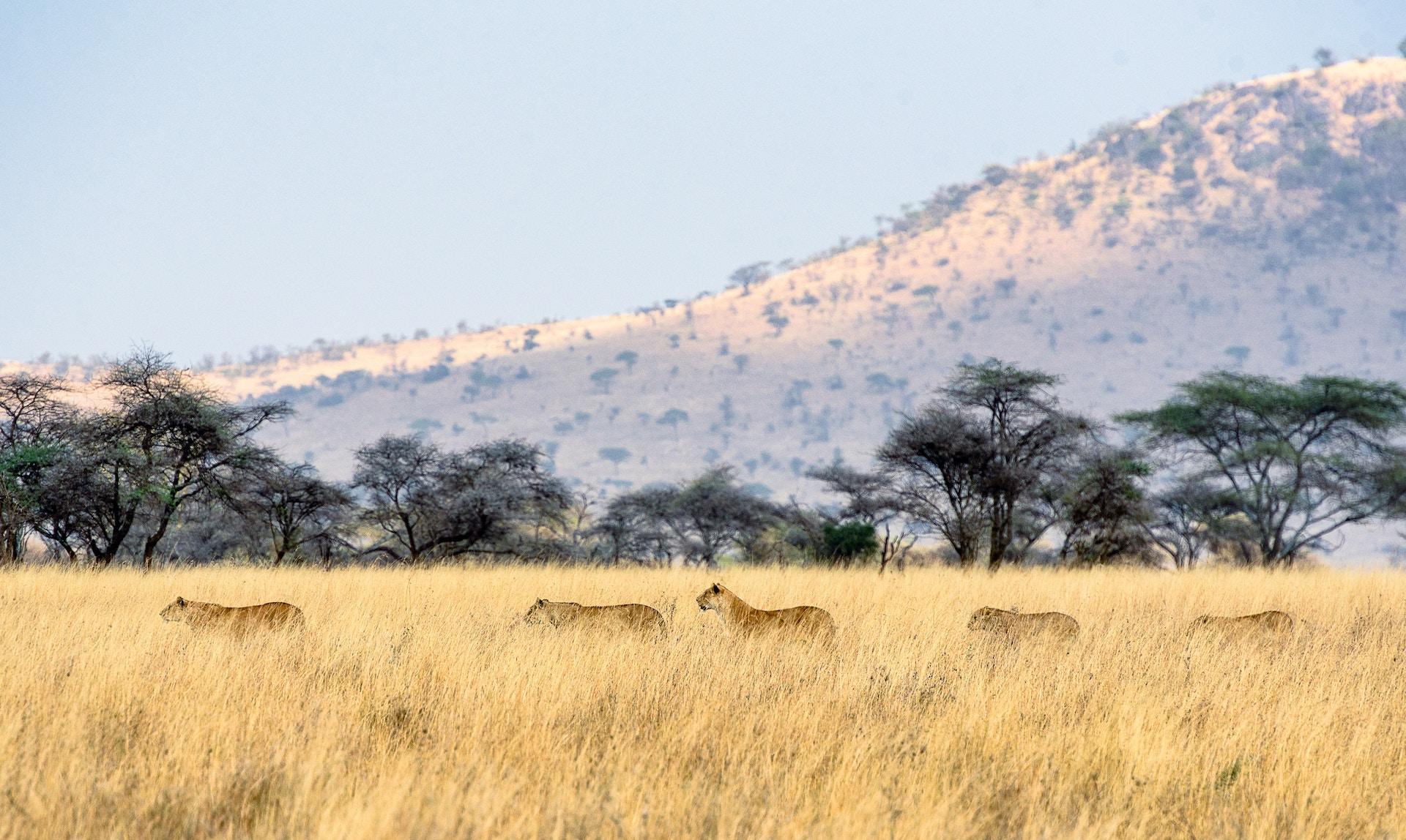 Safari-Travel-Insurance-Serengeti | AardvarkCompare.com