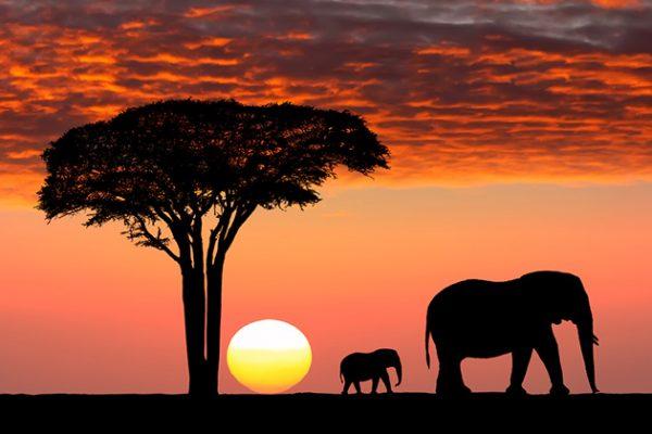 Safari Travel Insurance | AardvarkCompare.com