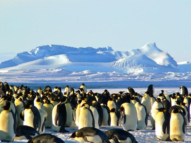 Aurora-Expeditions-Penguins | AardvarkCompare.com